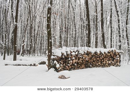Woodpile In Winter Forest