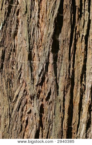 Coast Redwood Tree Bark From Muir Woods, Sequoia Sempervirens