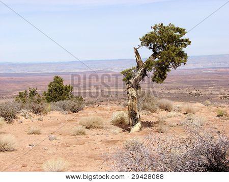 broken down tree in the desert