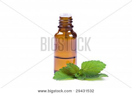 Peppermint Oil And Fresh Mint