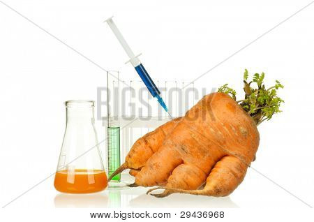 Genetically modified organism - ripe carrot with syringes and laboratory glassware on white background