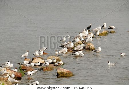 Seagulls on rocks in the water