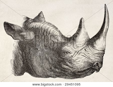 Rhinoceros head old illustration. By unidentified author, published on Le Tour du Monde, Paris, 1867