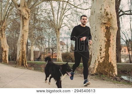 poster of Young Athlete Running Canicross With His Border Collie Dog .young Man Runs With His Dog City Park. H