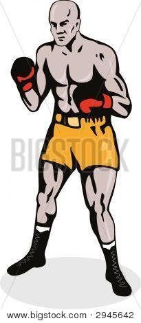 Boxer Posing Front
