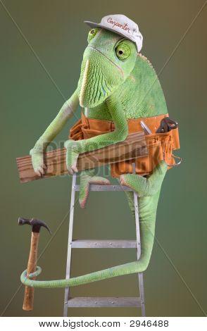 Chameleon Carpenter