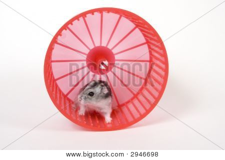 Mouse In A Red Wheel