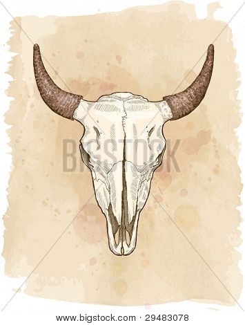 cow skull - vector sketch