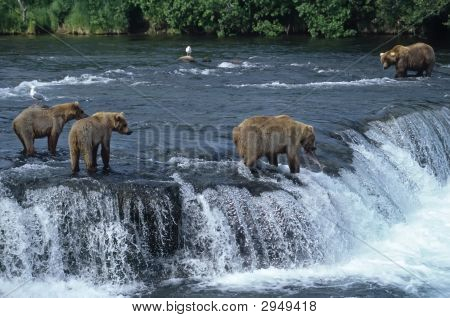 Female Grizzly With Her Cubs At Waterfall,Big Male Approaching.