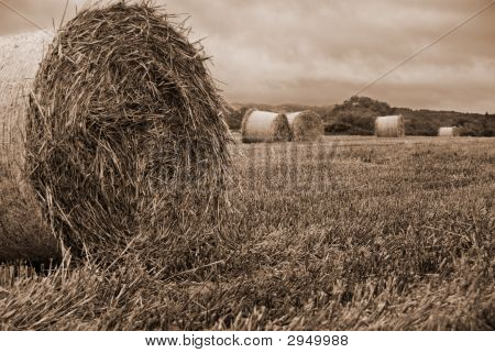 Hayfield In Sepia