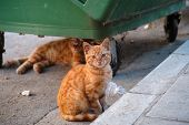 Stray Cats Or Street Cats Near Garbage Container. One Of Them Under The Garbage Container And The Ot poster