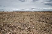 Furrows Row Pattern In A Plowed Field Prepared For Planting Crops In Spring. Horizontal View In Pers poster