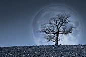 Lone Tree With Moon On Background - Image With Element Furnished By Nasa  - Photo Composition With I poster
