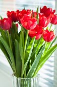 A Bouquet Of Yellow Tulips In A Vase On The Floor. A Gift To A Womans Day From Yellow Tulip Flowers. poster