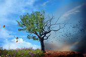 stock photo of raven  - live and dead tree - JPG