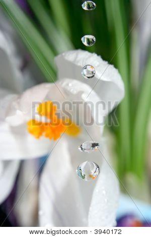 Water Flower.