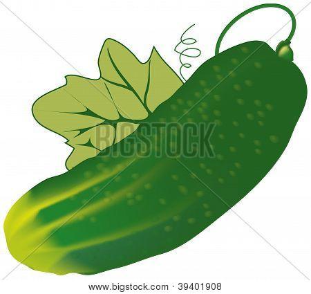 Vector cucumber