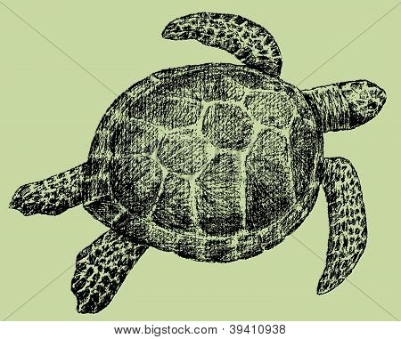 Sea Turtle.eps
