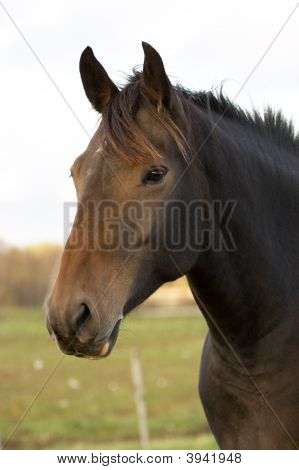 Stallion Portrait