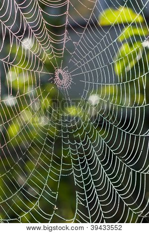 Spider Web Under Sunlight