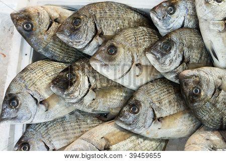 Goldbrassen bream Fisch auf dem Markt