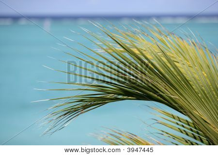 Palm Frawn