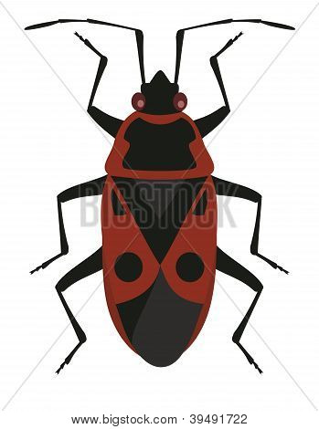 Red Soldier Bug