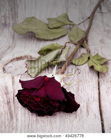 Dried faded roses