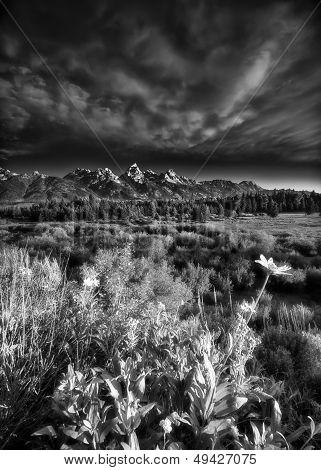Blacktail Ponds Overlook