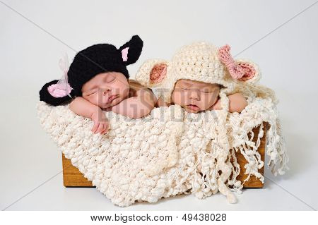 Newborn Twin Girls Wearing Black Sheep And Lamb Hats