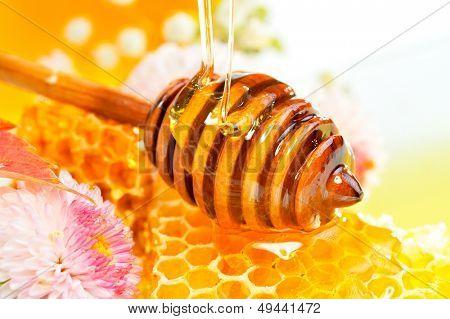 nido de abeja de oro
