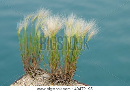 Grass In Buffington Harbor, Gary, Indiana