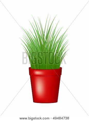 Grass in red flowerpot