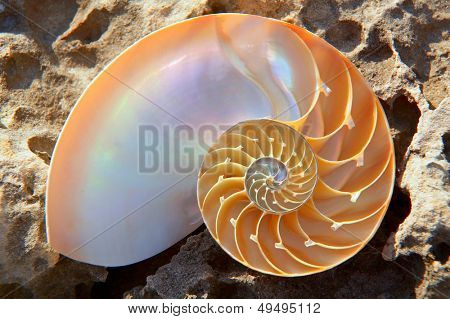 colorful nautilus shell section on a rock