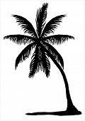 Silhouette of a palm tree on a white background