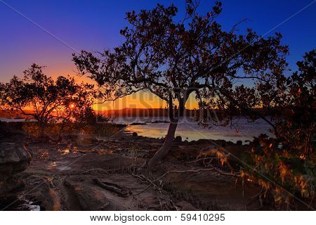 Sunset Mangrove  Low Tide And Intertidal Shallows