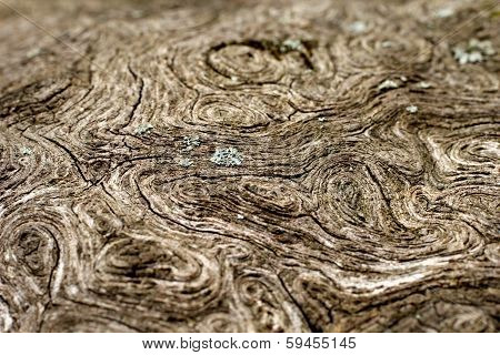 Stressed, Weathered Wood Grain Texture With Lichen Macro