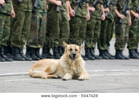 Military Dog With Open Mouth