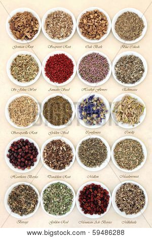 Medicinal herb selection also used in witches magical potions in white porcelain bowls with titles  over mottled handmade paper background.