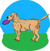 A Retriever with a Frisbee