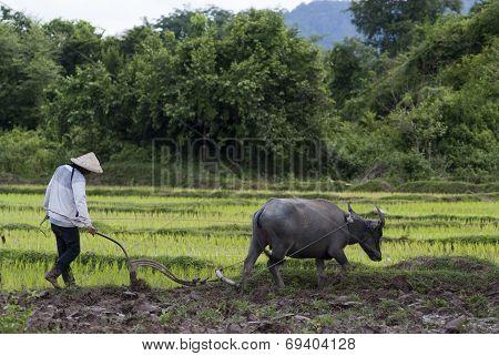 Land Preparation