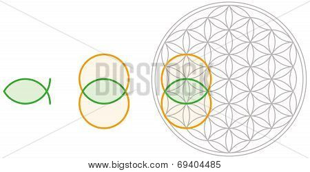 Vesica Piscis in Flower of Life
