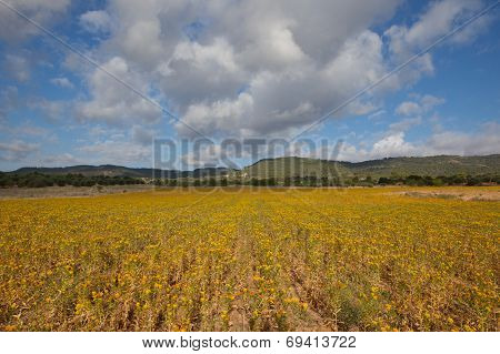Yellow Fields For Ever