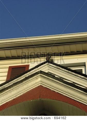 Ardilla en techo