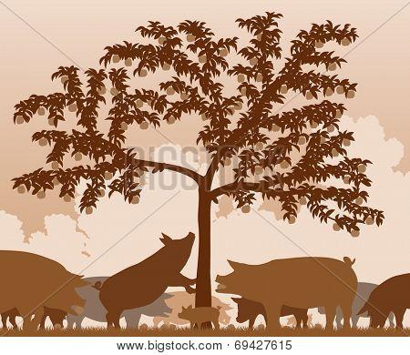 Illustration of free-range pigs feeding under an apple tree