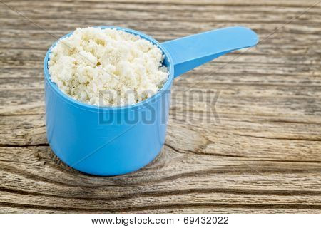 whey protein powder in a blue plastic measuring scoop against grained wood