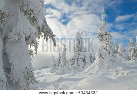 Winter landscape with pine forest under snow