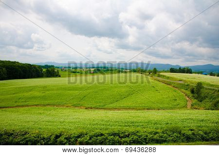 Hokkaido Landscape : Field For Agriculture In The Mountain In Cloudy Day Hokkaido Japan