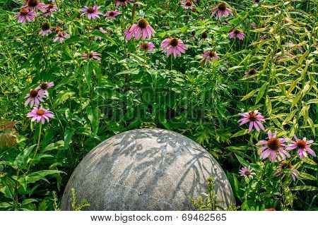 Coneflowers And Sphere