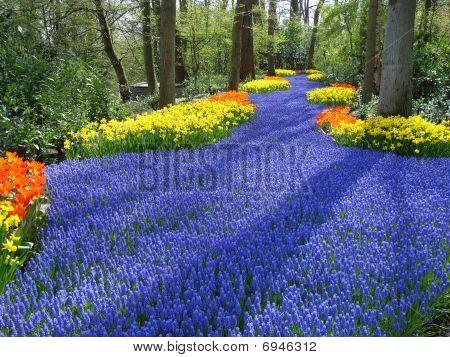 Lane Of Colorful Spring Flowers In  Dutch Spring Garden  (keukenhof, The Netherlands)